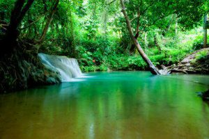 natural pool at Rabeang Pasak Tree House