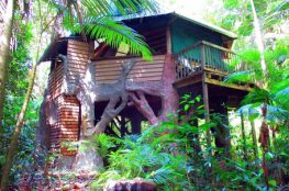 Queensland Trehouse - Jungle Treehouse Daintree Rainforest