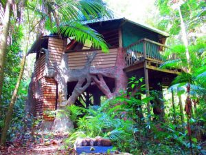 Jungle Treehouse Daintree Rainforest Queensland