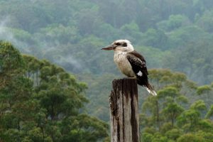 Montville Queensland Australia