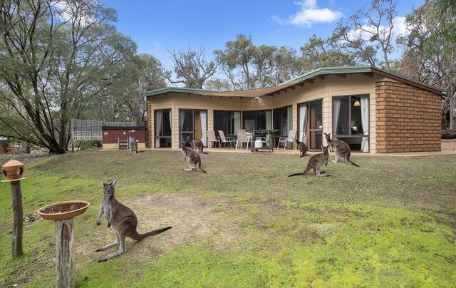 Yelverton Brook Conservation Sanctuary Kangaroos