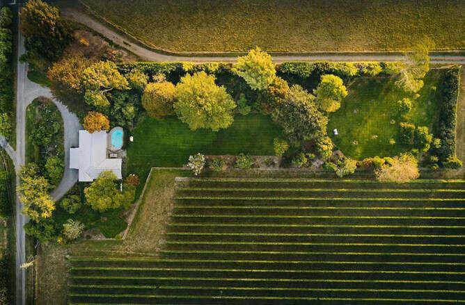 Vineyard Holiday Home Pool - Blenheim Vineyard Accommodation